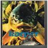 Rini Groothuis - Karper ( 1e druk 1977 )