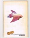A. van den Nieuwenhuizen - Zoetwatervissen I ( plaatjesalbum Rizla ) Zo leer je vissen kennen