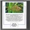 C. Andrews, A. Exell, N. Carrington - Praktisch Handboek Gezonde en Zieke Vissen