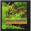 Christel Kasselmann - Aquariumplanten - Alle Soorten uit de Praktijk
