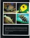 Hans J. Mayland - Koraalvissen en Lagere Dieren -- Van het tropische rif naar het aquarium