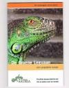 Dian Herpin - De Groene Leguaan -- Een populaire kanjer