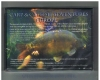 Tony Davies-Patrick - 2 DVD - Carp & Catfish Adventures Europe