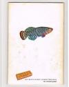 A. van den Nieuwenhuizen - Zoetwatervissen II ( plaatjesalbum Rizla ) Zo leer je vissen kennen