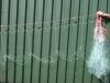 Zeebaarsnet / Staand want netten - Zeebaarsnet 30 meter met drijvers, 65cm ( zgn; Warrelnet, Tongnet staandwant)